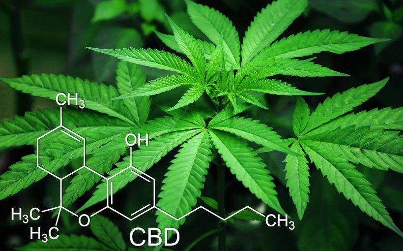 Tschechien Drogen Canabis Gras