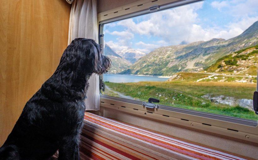 Großbritanien nach dem Brexit: Hunde und Haustiere