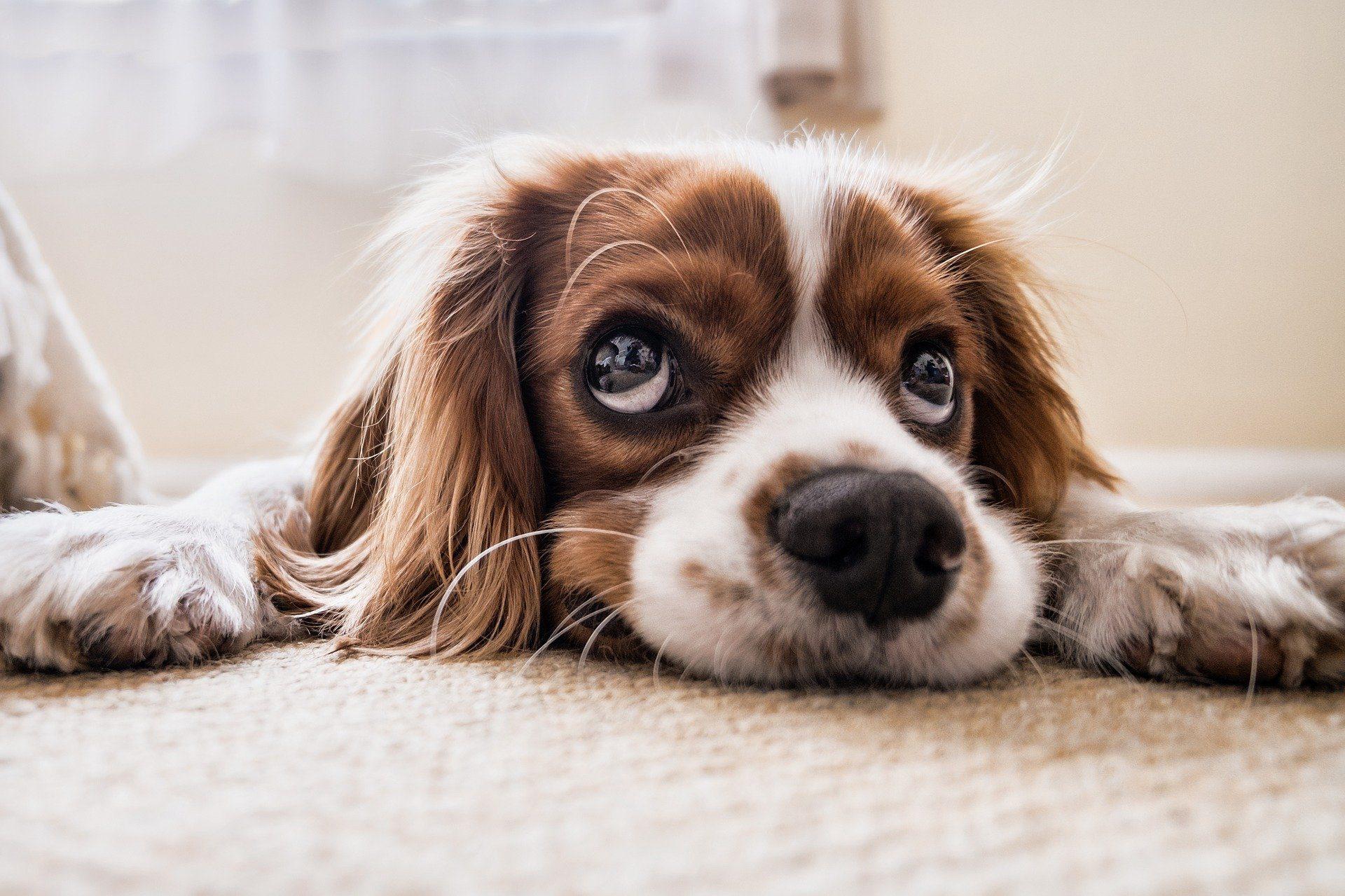 Hunde erkranken in Norwegen